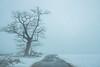 Mysterious tree (ppaschka) Tags: baum tree strasse street weg vogel schnee snow canon 700d sigma super wide 2 24mm 28f
