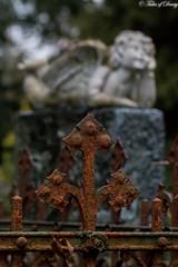 Darmstadt, Alter Friedhof (Sven Kapunkt) Tags: darmstadt hessen friedhof friedhöfe cemetery cemeteries cimetière grab gräber begraafplaats engel angel