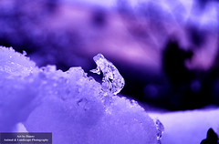 Art of nature. Ice Figure (Art by Danny Photography) Tags: eis eiskristall kristall snow ice schnee icecrystal crystal violett violet dannyhermann artbydanny photography foto fotografie makro macro winter nature artofnature