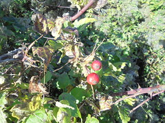 1277 (en-ri) Tags: cespuglio foglie leaves sony sonysti