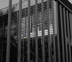 La lampe 2- The lamp 2 (p.franche occupé - buzy) Tags: lx3 bruxelles brussel brussels belgium belgique belgïe europe pfranche pascalfranchehdr dxo flickreliteschaerbeek schaarbeek grilles fences lamp lampe skancheli monochrome noiretblanc blackandwhite zwart wit blanco negro schwarzweis μαύροκαιάσπρο inbiancoenero 白黒 黑白чернобелоеизображение svartochvitt أبيضوأسود mustavalkoinen שוואַרץאוןווייַס bestofbw désaturationpartielle architecture architectory building ecoleemmanuelhiel