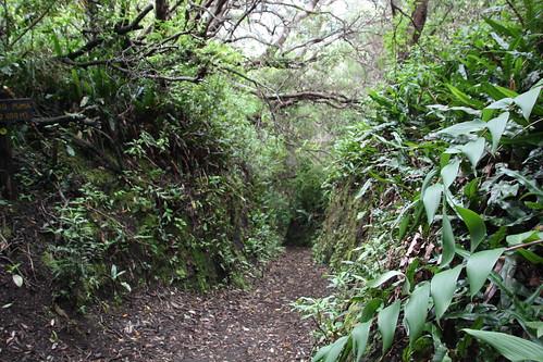 Weg im Gespensterwald