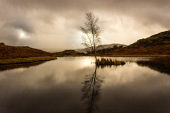 Light and Lone Tree at Lily Tarn, Loughrigg