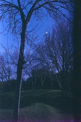 parque das nações, november 2014 (Teófilo de Sales) Tags: analog analogic film fuji fujifilm fujixtra400 nikkormatel nikkormat nikon nikkor 50mm 35mm dusk sunset winter grainy lisboa lisbon parque das nações expo 98 oceanario oceanariodelisboa garden trees