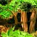Architecture minuscule #03 la clairière des thuyas (cedar glade)