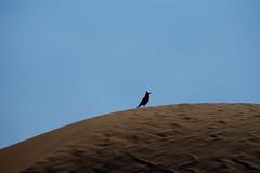 Al Ain (mhbous) Tags: winter bird photography sand friend dubai fuji desert farm dune uae bbq fujifilm alain ain     xe1