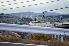 (Yorozuna / ) Tags: plant japan outdoor guardrail kanagawa  japanesepampasgrass yokosuka  uraga   japanesesilvergrass       pentaxsmctakumar55mmf18 maborikaigan maboriseaside     obaradai