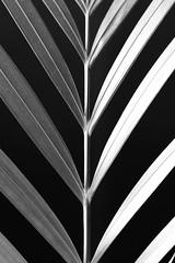 natural symmetry (mgarcacalvo) Tags: verde planta blancoynegro tamron90mm simetra