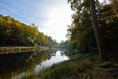 Paisible coin de nature (Excalibur67) Tags: autumn trees nature forest automne landscape nikon sigma arbres alsace paysage reflexion reflets eaux tangs d7100 vosgesdunord forts ex1020f456dchsm