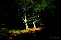 sunlight in dark forest (Mimadeo) Tags: trees light shadow sunlight tree forest dark landscape shadows trunks sunray