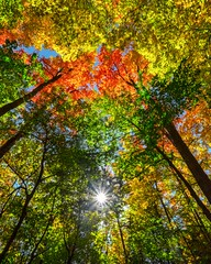autumn arrives! (-liyen-) Tags: sun autumn leaves trees colour lookingup ontario canada fujixt1 pregamewinner pregamesweep challengeyouwinner gamewinner