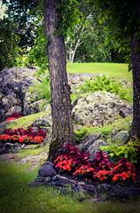 Kenora Has Beautiful Spaces (Vegan Butterfly) Tags: park flowers plants lake ontario tree garden rocks kenora