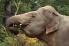 Aziatische olifant (K.Verhulst) Tags: elephant elephants emmen noorderdierenpark olifanten dierentuinemmen aziatischeolifant asiaticelephants