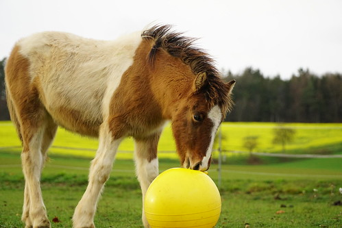 Saphir playing soccer