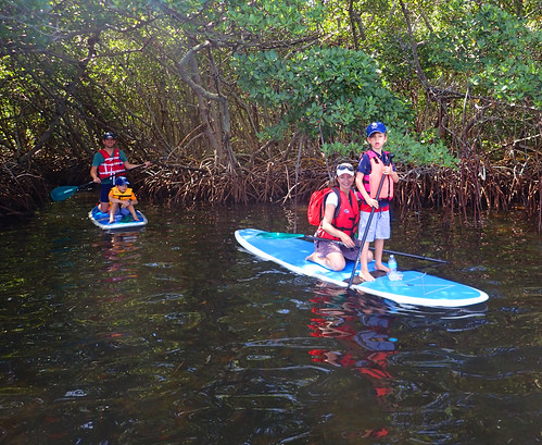 The mangrove tunnels are fun for all ages.