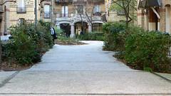 Le peuple de l'herbe bien dcid  sortir du maquis (Robert Saucier) Tags: paris building green architecture pavement vert img9197