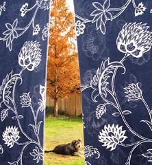 Laundry line, Redwood Tree, & Gus (Crickett-Grrrl) Tags: blue autumn orange dog tree fall indigo sheets foliage laundry gus dawnredwood