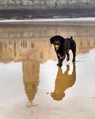 (Antonio Balsera) Tags: espaa gijn asturias perro es playadesanlorenzo iglesiadesanpedro principadodeasturias
