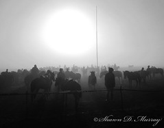 Base of Mount Bromo (murraysdk) Tags: horses blackandwhite sun mountain silhouette indonesia foggy bromo