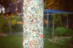 44990018 (alexdotbarber) Tags: color analog 35mm sticker bokeh stickers rangefinder f28 kodakgold100 1250 expiredfilm colorfilm colornegative petri7s houstonmuseumdistrict 45mmf28
