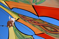 when pigs fly.. (a world seen through open eyes) Tags: camping costumes art love festival yoga hippies freedom dance spring bush community dancing cosplay joy markets memories hippy happiness victoria tribal electronicmusic psytrance meditation spirituality dust liberation beautifulpeople alternative humans musicfestival freaks multiculture doof earthcore perspecitve oneness experiences lettinggo befree nodiscrimination bushdoof beautifulhumans lifestylefestival awstoe earthcore2015 earthcorefestival