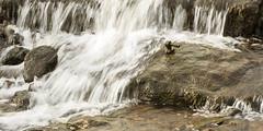 Photo of River Hinge Peg