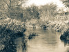 Winters Embankment (Coisroux) Tags: winter river sepia water trees skyline fenceline