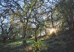 Spring Lake Regional Park in Sonoma County (harminder dhesi photography) Tags: snapseed vscocam vsco bayarea norcal california santarosa sonomacounty sonoma nature sun trees park view outdoors winter hiking landscape