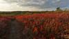 Golden Red (Ken Krach Photography) Tags: westvirginia dollysods
