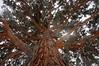 DSC02276_ (aleksey1971) Tags: siberia altai belokurikha winter nature forest tree сибирь алтай белокуриха зима природа лес