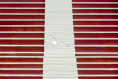Flying gull and a stairway (Jan van der Wolf) Tags: map158229v gull meeuw bird vogel flying fly trap stairs staircase stairway red rood roodenwit redandwhite redrule lines lijnen symmetric symmetry symmetrie visualrhythm steps treden tribune stands