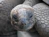Seychellen-3LaDigue24_20161005-1625 (sabine.haecker) Tags: seychellen seychelles schildkröte turtle ladigue