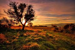 **** (* landscape photographer *) Tags: lucania italy landscapephotographer paesaggio sunset tramonto alberi tree valley valle sinni nikon 1020 flickr 2016
