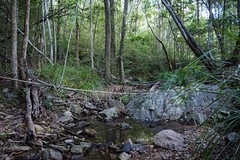 creek (dustaway) Tags: creekscape streamscape rainforest coomeravalley sequeensland queensland australia landscape