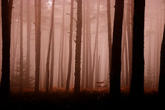 Mystic (Bruno MATHIOT) Tags: forêt forest nature outdoor tone ton brume brouillard eos canon 760d alsace france french europe 1770 sigma fog chaud hot brun color couleur