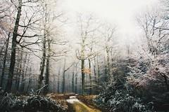 when you love something (lina zelonka) Tags: kirn germany nahetal linazelonka naheland forest wald frost winter dezember december trees hunsrück deutschland rheinlandpfalz rlp rhinelandpalatinate nikond7100 18105mm trail fog dust nebel
