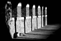 Al sole nel portico (luporosso) Tags: archi portico gatti cats bianconero biancoenero blackandwhite blackwhite blancoynegro noiretblanc bn bnw bw monocromatico monochrome monocrome monocromo ombra shadow abig abigfave