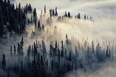 Sunrise at Hurricane Ridge, Olympic National Park (James Duckworth) Tags: jamesduckworthphotography fineartphotography fog landscape mist moody nobody trees