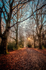"""lovely leaf-strewn path between birch trees past the sun, Bois de Breuil (Breuil Forest, Calvados, Normandy, France (grumpybaldprof) Tags: honfleur normandy normandie france calvados """"boisdubreuil"""" """"forestofbreuil"""" vasouy penndepie conservation """"conservatoiredulittoral"""" rhododendrons """"coastalconservancy"""" bois forest trees deciduous coniferous wood woods coastline """"dukesofnormandy"""" french kings """"philippeauguste"""" breuil wildlife wildboar """"pinemarten"""" """"redfox"""" deer """"forestwalk"""" landscape branches leaves avenue path leafstrewn sun sunlight sharp walk arch naturalarch colour light sigma 1020 1020mm f456 """"sigma1020mmf456dchsm"""" fineart foret arbres contrast shadow ethereal hdr"""