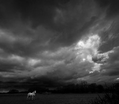 The Indomitable White Stallion (p.g604) Tags: the indomitable white stallion horse overcast cloudy blackwhite bw monochrome stormy field grass horizon trees hertfordshire england uk pentax wideangle heavy dark brooding contrast pentaxk30