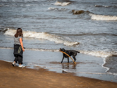 Fetched (dahol2) Tags: animals newbrighton places thewirral westkirby dogs