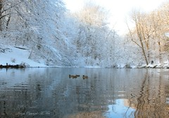 Winter from my archives. (nondesigner59) Tags: winter tpwoods snow pond ducks water nature archives copyrightmmee eos50d nondesigner nd59