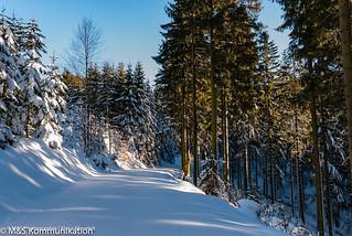 unberührter Waldweg im Winterwald aufgenommen im Sauerland - untouched forest path in winter forest photographed in Sauerland