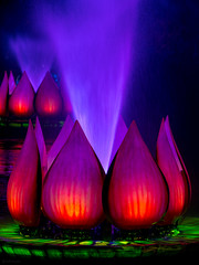 Animal Kingdom - Flower Power (Jeff Krause Photography) Tags: ap animal colored disney floating floats fountain jets kingdom lake light park preview projections rivers show wdw water theme kissimmee florida unitedstates us