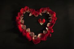 Blooming Heart (Lichtbursche) Tags: herz blüte tropfen schwarz rot weis motiv blütenblätter blütenblatt heart drops black red white motive petals flowerpetal