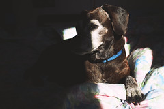 Sally (Marta Marcato) Tags: dog home bed relax sun shadow contrast cane casa letto sheets blanket coperte ombra sole contrasto nikond7200