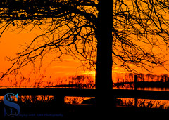 Tree Silhouette at Sunrise (Singing With Light) Tags: 2016 2017 20th alpha6500 ct charlesisland duckpond february milford mirrorless singingwithlight a6500 beach photography singingwithlightphotography sony sunrise walnutbeach winter