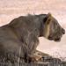 Samburu Kenya-61.jpg