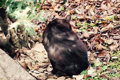 Today's Cat@2017-03-19 (masatsu) Tags: cat thebiggestgroupwithonlycats catspotting pentax mx1