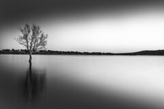 Lights / Luces (clavariadelphus) Tags: lights luces luisfernández landscape largaexposición longexposure embalsedesantillana embalse reservoir reflejos reflection blackandwhite blancoynegro nikon nature naturaleza paisaje sombras shadows shapes formas árbol tree agua water art artística artistic madrid manzanareselreal magia magic d7000 sigma1750 silence silencio silhouette silueta filtrond filtrodegradado filtro filter lee